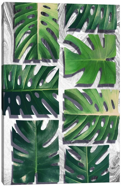 Monstera Deliciosa Canvas Art Print