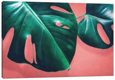 Monstera II Canvas Art Print