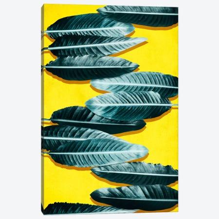 Tropical II Canvas Print #LMO68} by LEEMO Canvas Art