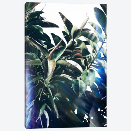 Verve Canvas Print #LMO69} by LEEMO Canvas Wall Art