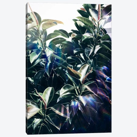 Bliss Canvas Print #LMO9} by Leemo Canvas Print