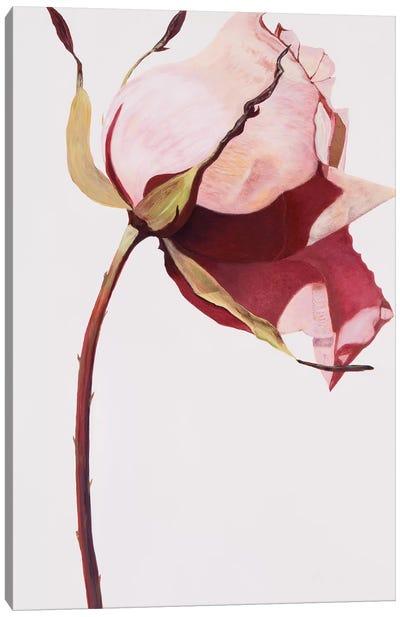 Love Is A Rose I Canvas Art Print