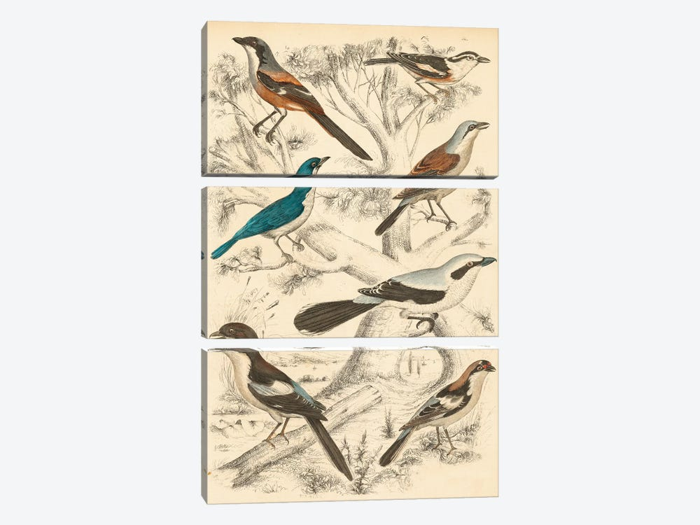 Avian Habitat V by Milne 3-piece Canvas Print