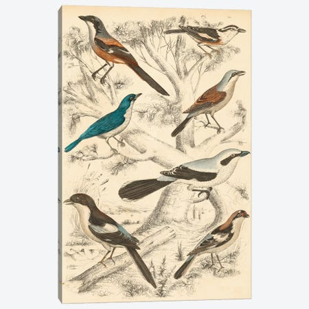 Avian Habitat V Canvas Print #LNE1} by Milne Canvas Artwork