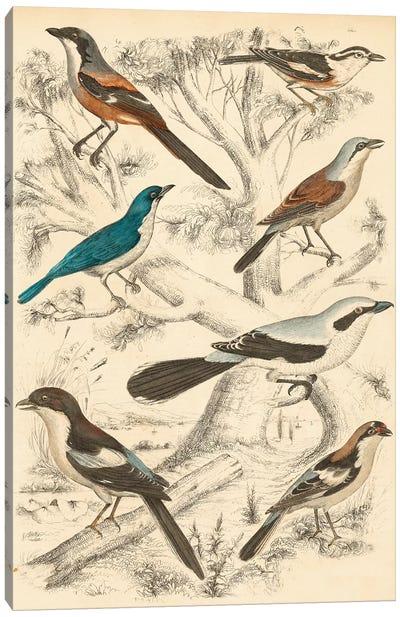 Avian Habitat V Canvas Art Print