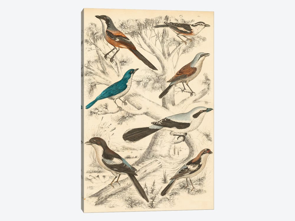 Avian Habitat V by Milne 1-piece Canvas Print