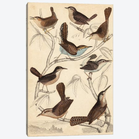 Avian Habitat VI Canvas Print #LNE2} by Milne Canvas Artwork