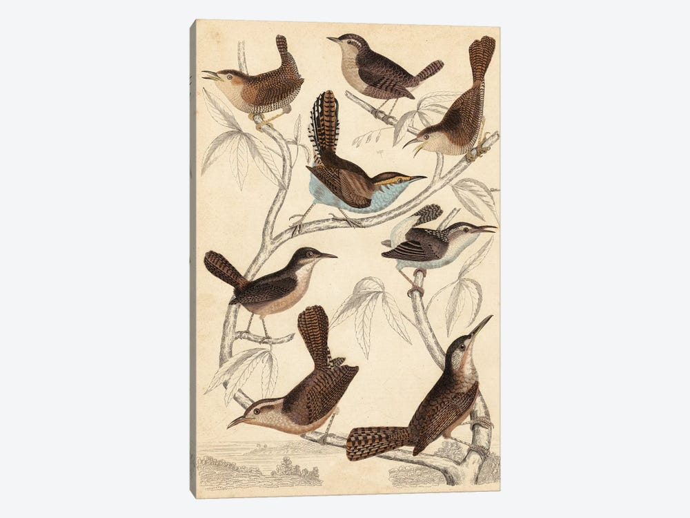 Avian Habitat VI by Milne 1-piece Canvas Wall Art
