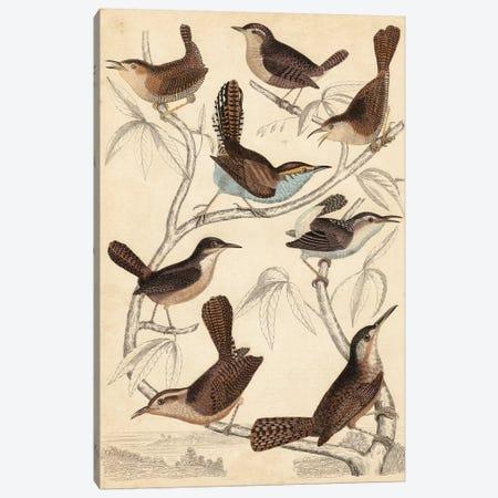 Avian Habitat VI Canvas Print #LNE2} by Milne Canvas Artwork