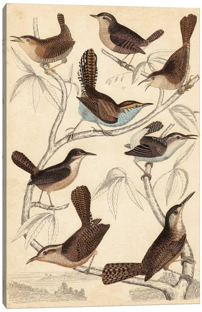 Avian Habitat VI Canvas Art Print