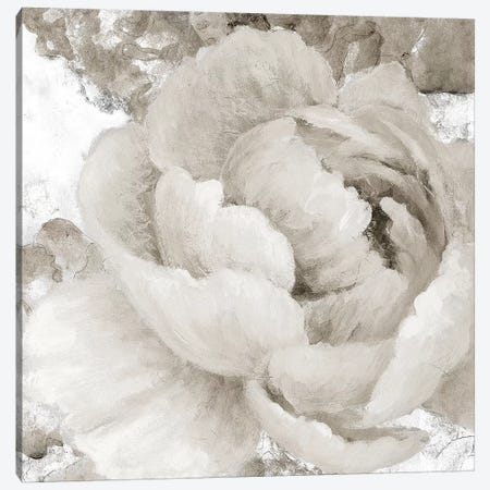 Light Grey Flowers II Canvas Print #LNL110} by Lanie Loreth Art Print