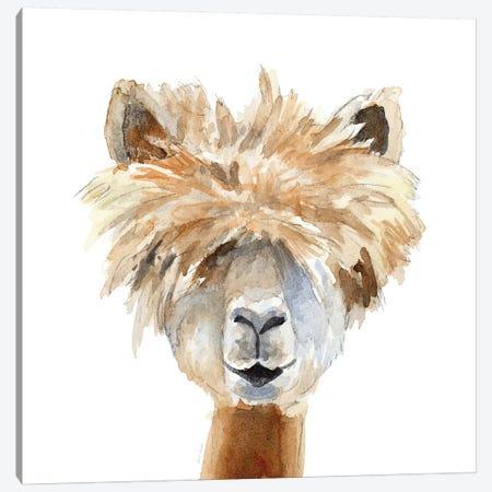 Llama with Bangs Canvas Print #LNL114} by Lanie Loreth Canvas Art