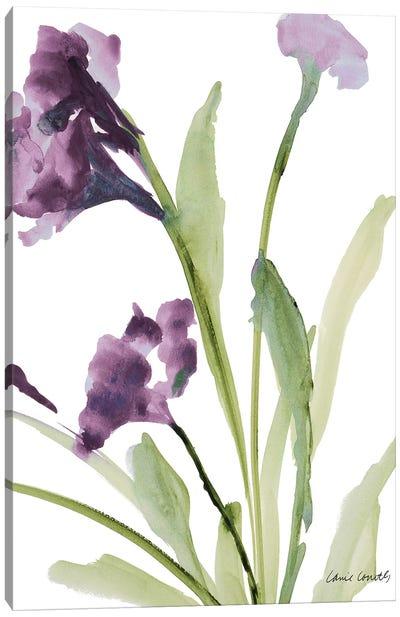 Purple Belles I Canvas Art Print