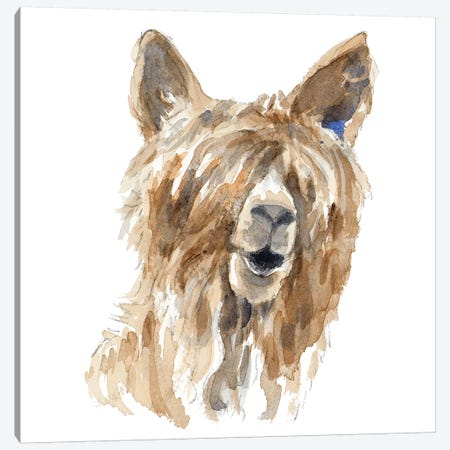 Shaggy Llama Canvas Print #LNL172} by Lanie Loreth Canvas Print