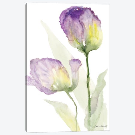 Teal and Lavender Tulips II Canvas Print #LNL208} by Lanie Loreth Art Print