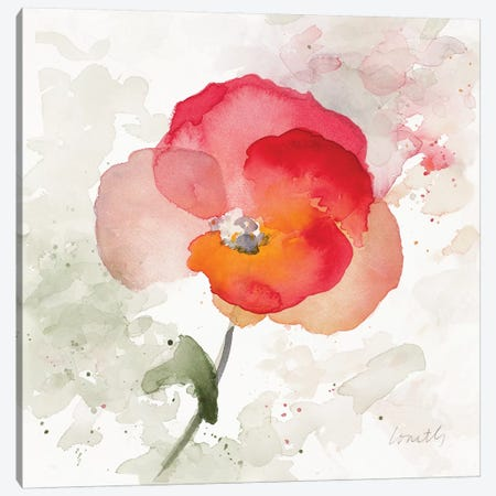 Translucent Poppy I Canvas Print #LNL214} by Lanie Loreth Art Print