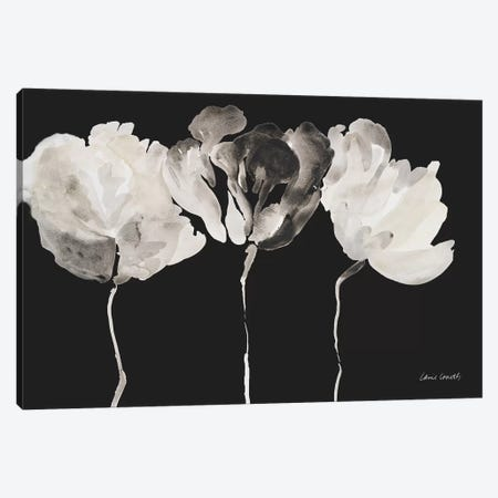 Trio in Light on Black Canvas Print #LNL220} by Lanie Loreth Canvas Print