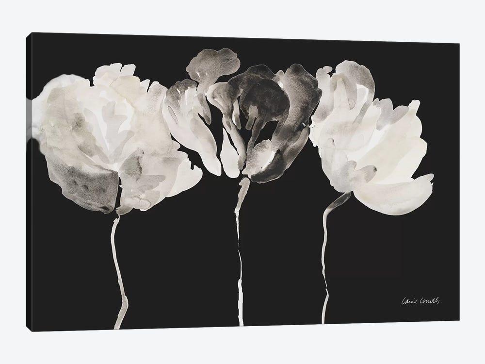 Trio in Light on Black by Lanie Loreth 1-piece Canvas Print