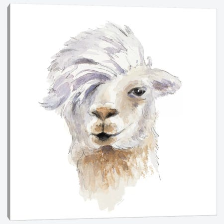 Comb Over Llama Canvas Print #LNL307} by Lanie Loreth Canvas Art Print
