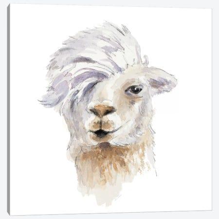 Comb Over Llama Canvas Print #LNL307} by Lanie Loreth Canvas Art Print