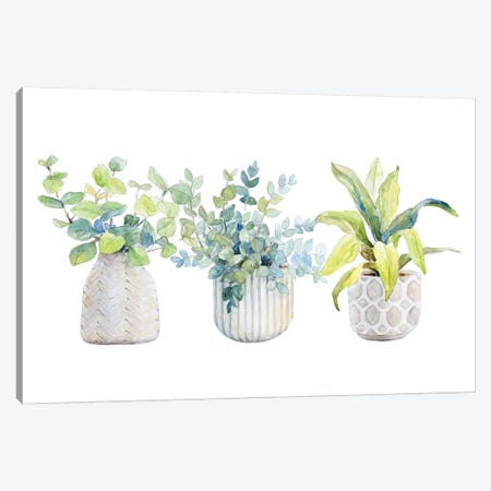Decorative Plant Arrangement I Canvas Print #LNL312} by Lanie Loreth Canvas Print