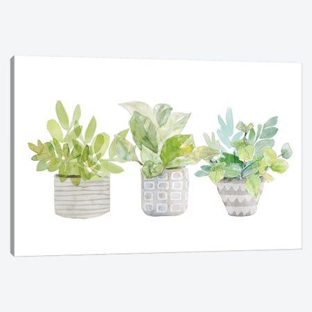 Decorative Plant Arrangement II Canvas Print #LNL313} by Lanie Loreth Canvas Print