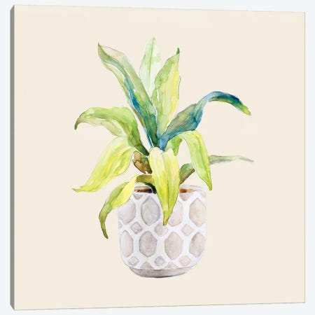 Decorative Potted Plant I Canvas Print #LNL314} by Lanie Loreth Canvas Artwork