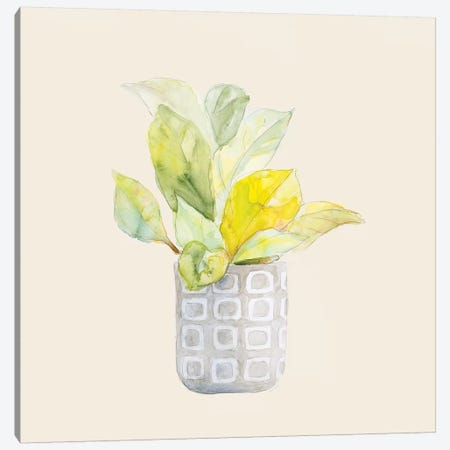 Decorative Potted Plant II Canvas Print #LNL315} by Lanie Loreth Canvas Wall Art
