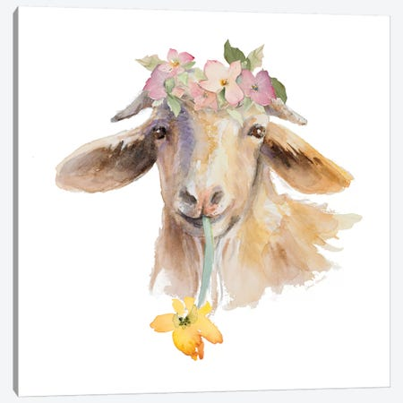 Flower Goat Canvas Print #LNL324} by Lanie Loreth Canvas Art Print