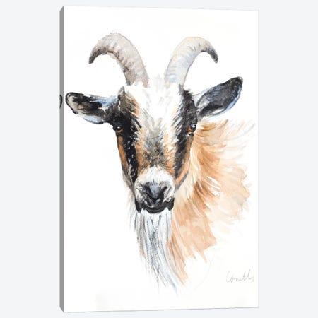 Goat II Canvas Print #LNL334} by Lanie Loreth Canvas Art