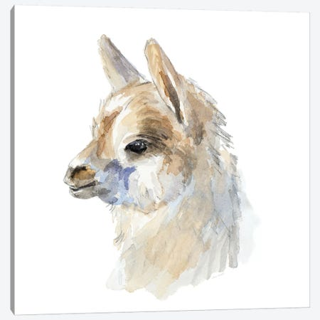 Side Portrait Llama Canvas Print #LNL405} by Lanie Loreth Canvas Artwork