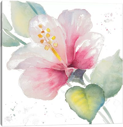 Fragrant Hibiscus II Canvas Art Print