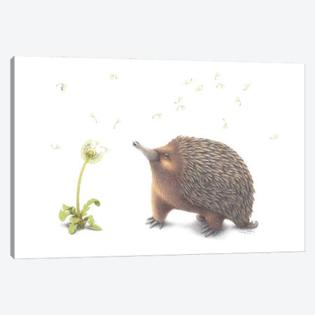 Echidna Wish Canvas Print #LNP15} by Lenny Pelling Canvas Print