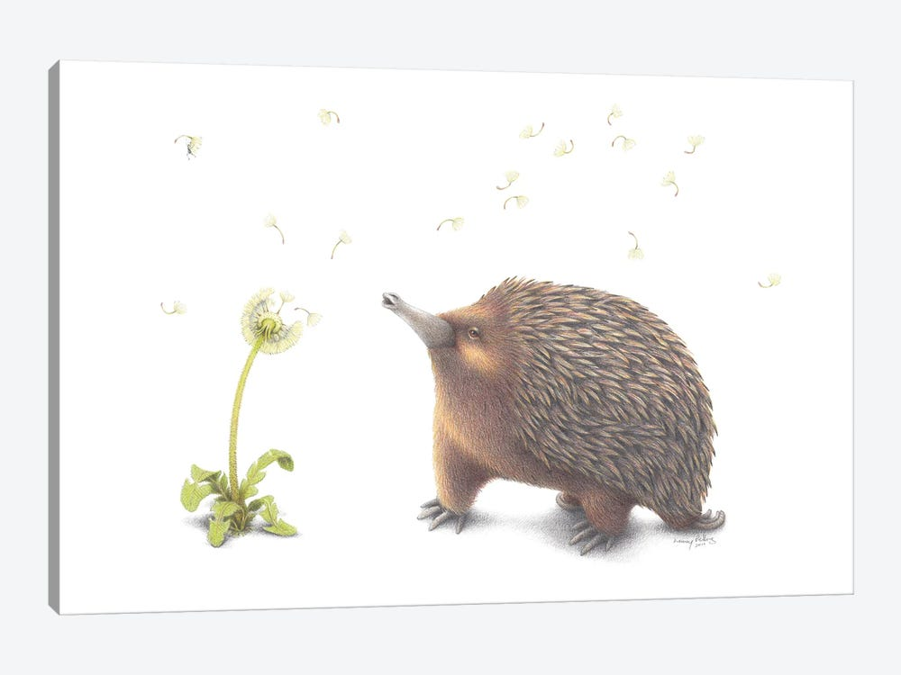 Echidna Wish by Lenny Pelling 1-piece Canvas Artwork
