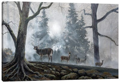 Deer Path I Canvas Art Print