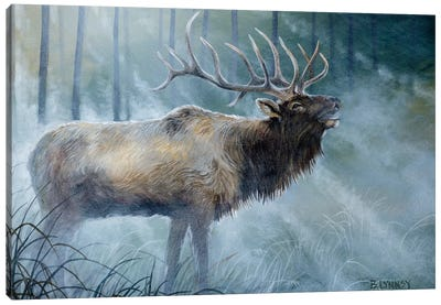 Elk Journey III Canvas Art Print