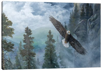 Soaring High II Canvas Art Print