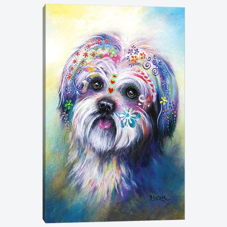 Boho Shih Tzu Canvas Print #LNT11} by Patricia Lintner Canvas Wall Art