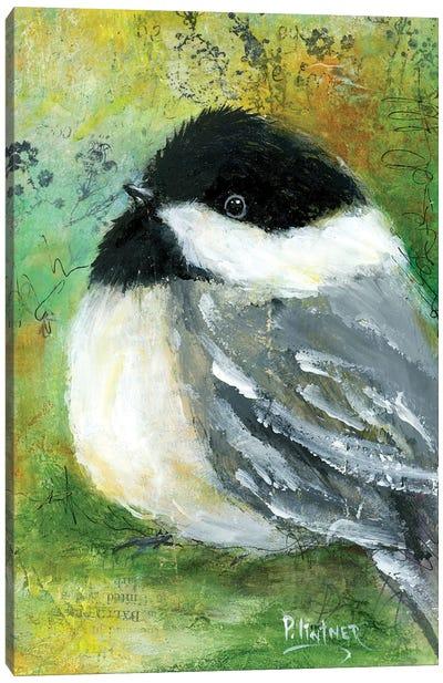 Chickadee Canvas Art Print