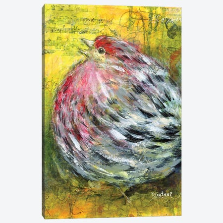 House Finch Canvas Print #LNT65} by Patricia Lintner Canvas Wall Art