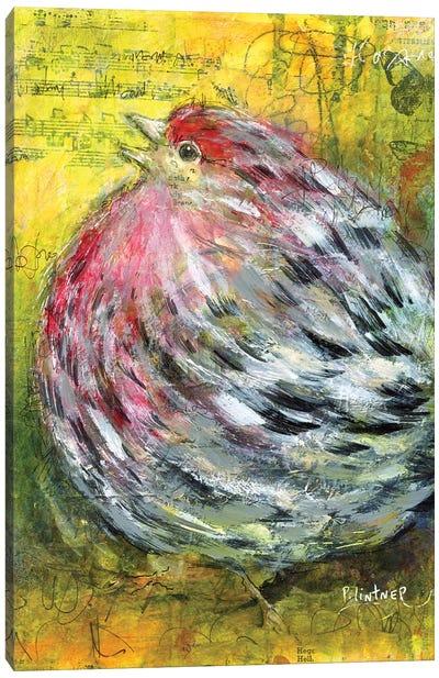House Finch Canvas Art Print