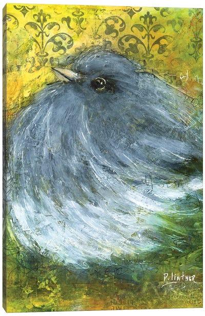 Junco Canvas Art Print