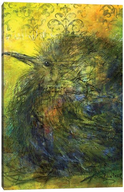 Kiwi Canvas Art Print