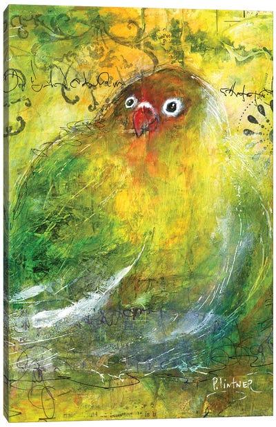 Love Bird Canvas Art Print