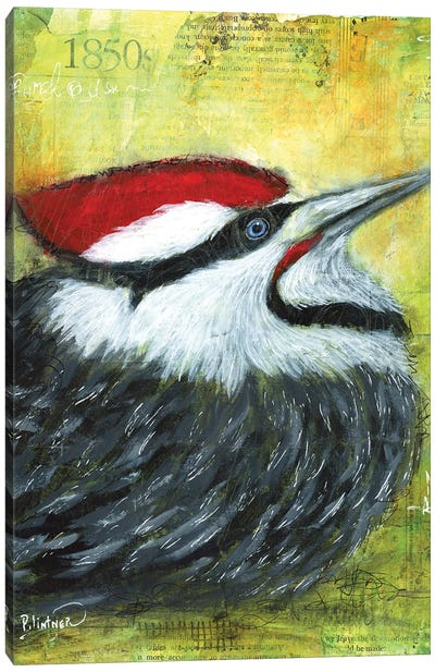 Pileated Woodpecker Canvas Art Print