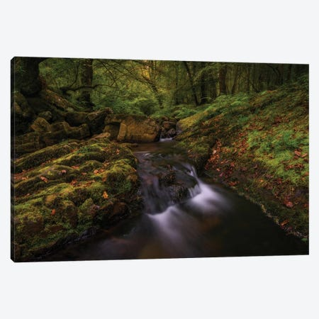 Deep Into The Forest Canvas Print #LNZ112} by Sergio Lanza Canvas Art