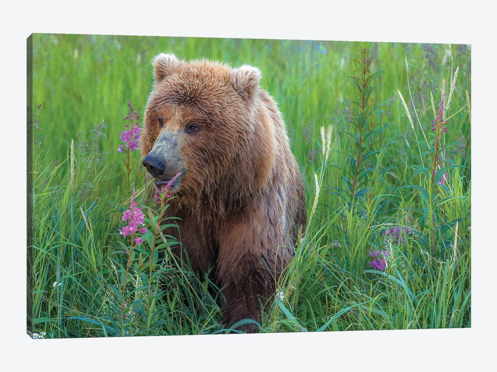Grizzly Sow by Sergio Lanza 1-piece Canvas Wall Art