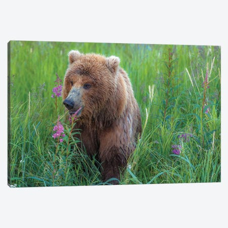 Grizzly Sow Canvas Print #LNZ130} by Sergio Lanza Canvas Artwork
