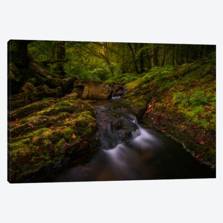 Forest Treasures Canvas Print #LNZ15} by Sergio Lanza Art Print