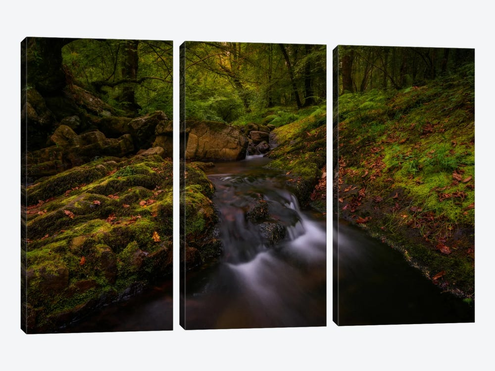 Forest Treasures 3-piece Canvas Artwork